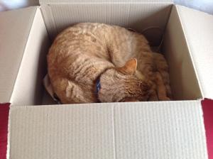 KatzeinKiste